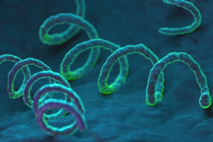 syphilis bacteria shown up close