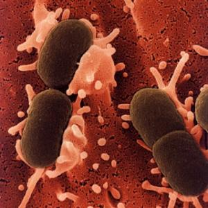 Bacteria that causes UTI's