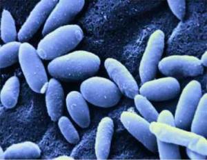 Candida Yeast Infection
