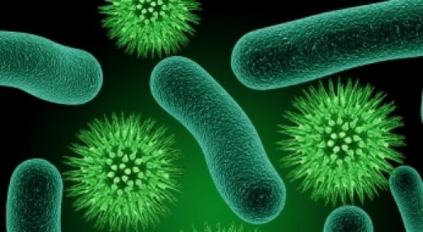 How does bacteria cause disease?